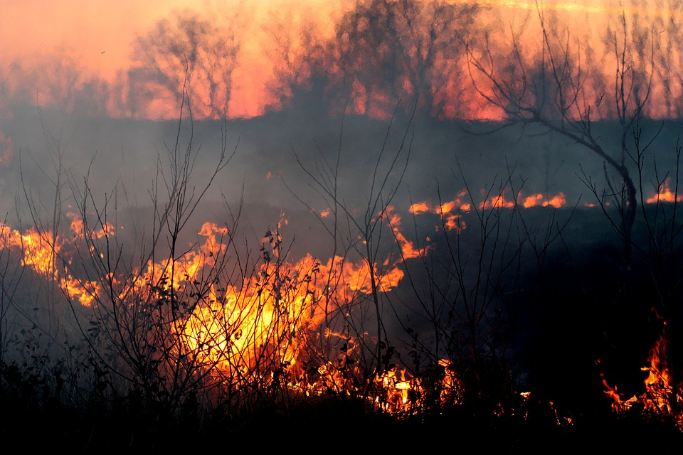 Class action seeking compensation for loss and damages caused by 2013 Blue Mountains bushfires